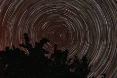 Polaris-35mm-187x30s-startrails+trees-600x400